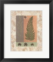 Framed Green Fern