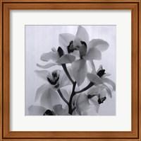 Framed Orchid Spray I