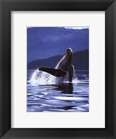 Framed Humpback Whale