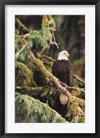 Framed Silent Sentinel, Alaska