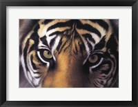 Framed Eyes of the Goddess: Sumatran Tigress