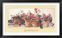 Framed Geraniums