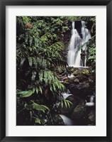 Framed Rainforest Waterfall, Hawaii
