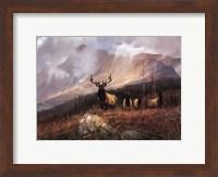 Framed Bookcliffs Elk I I