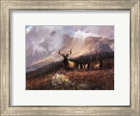 Framed Bookcliffs Elk I I