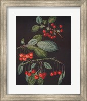 Framed Cherries (A)