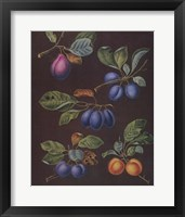 Framed Plums (A)