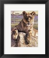 Framed Serengeti Lioness