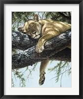 Framed Lake Manyara Lioness