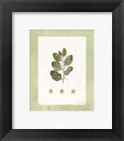 Starfish Botanical IV Framed Print