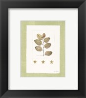 Framed Starfish Botanical III