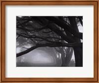 Framed Cypresses, Skyline Drive, South San Francisco, 1996