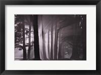 Framed Morning, Harding Park, San Francisco, 2002
