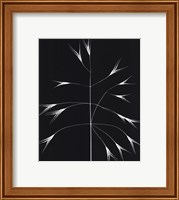 Framed Wild Grasses III