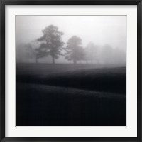 Framed Fog Tree Study II