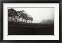 Fog Tree Study III Framed Print