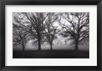 Framed Fog Tree Study IV