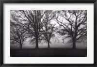 Framed Fog Tree Study IV