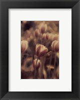 Framed Tinted Tulips I