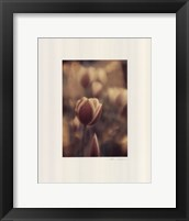Framed Tinted Tulips II