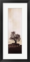 Framed Coast Oak Tree - Panel