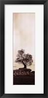 Framed Coast Oak Tree