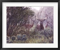 Framed Lone Star Whitetail
