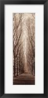 Framed Poplar Trees