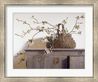Framed Apple Blossoms