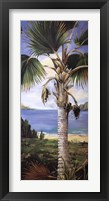 Framed Fan Palm