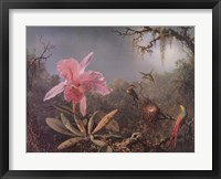 Framed Cattleya Orchid and Three Brazilian Hummingbirds