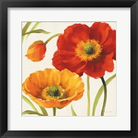 Framed Poppies Melody III
