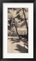 Framed Palm Shadows II