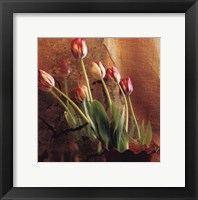 Framed Tulip Reflection