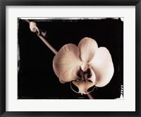 Framed Orchid