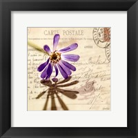 Framed Vintage Letter and Purple Daisy