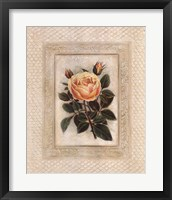 Framed Yellow Tea Rose I