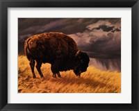 Framed Buffalo