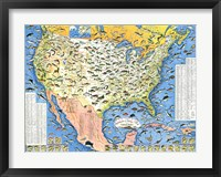 Framed Outdoor Life Sportsmen's Fish Map