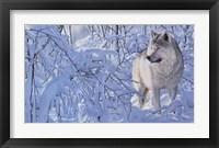 Framed Arctic Wolf