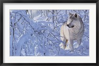 Framed Arctic Wolf