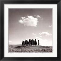 Framed Cypress Trees