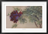 Framed Red Peony