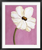 Framed White Cosmos On Pink