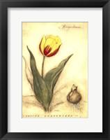 Framed Keizerskroon Tulip