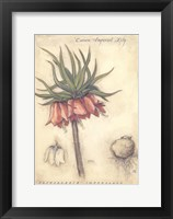 Framed Crown Imperial Lily