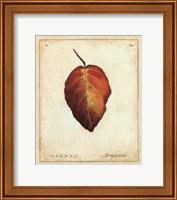 Framed Dogwood Leaf