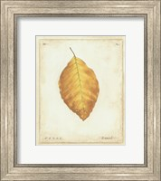 Framed Beech Leaf