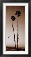 Framed Palmae Palm I