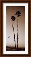 Framed Palmae Palm I